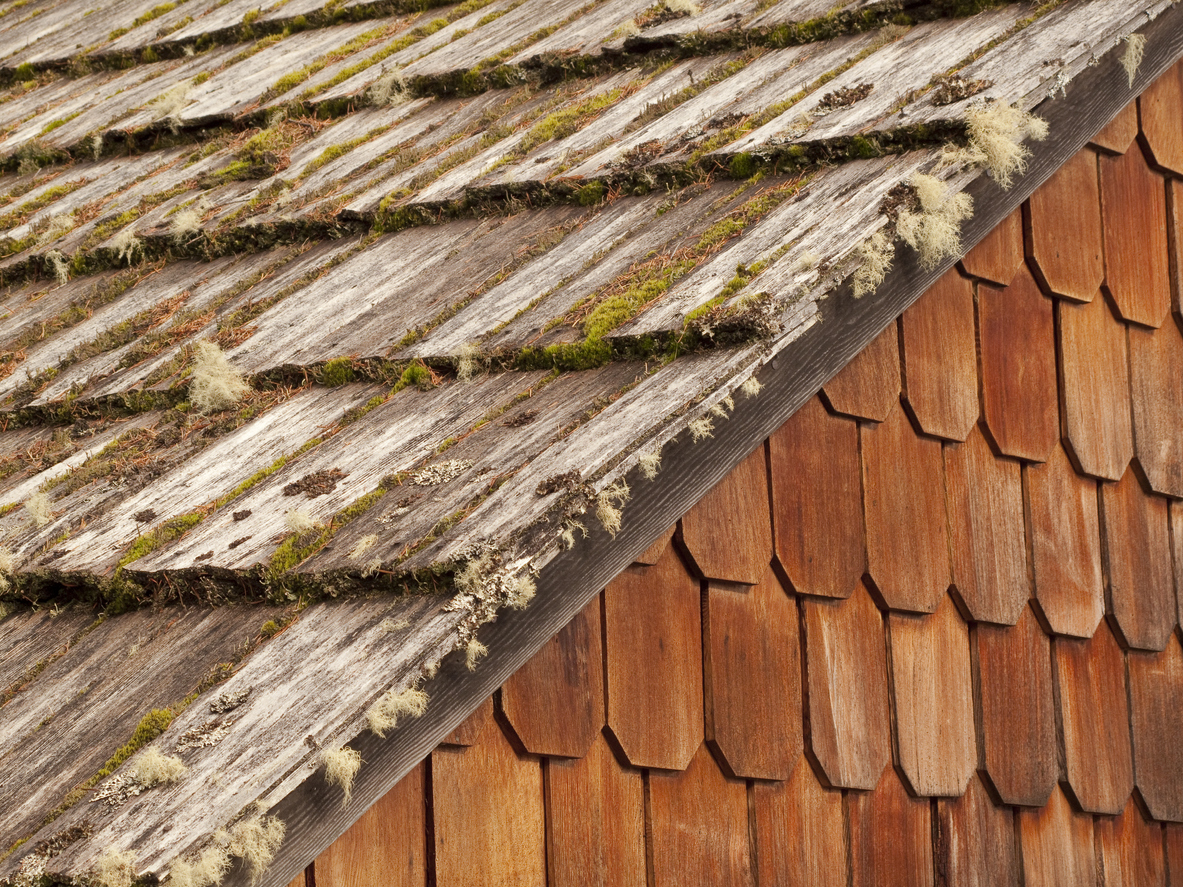 Why Does Old Wood Turn Gray?