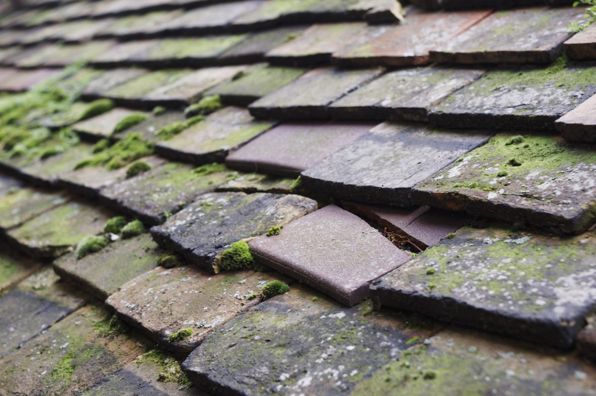 Preventing Moss on Your Roof