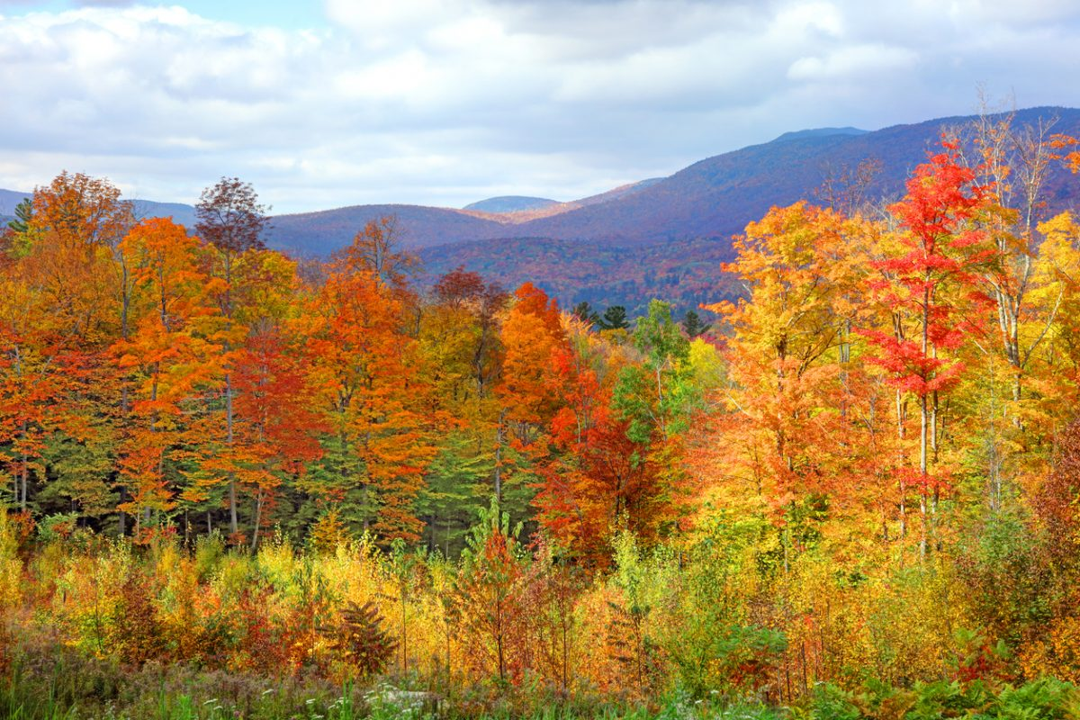 Why Do The Leaves Change Color in the Fall?