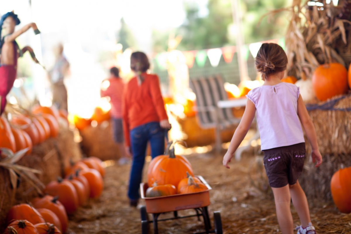 Family Fun Fall Activities