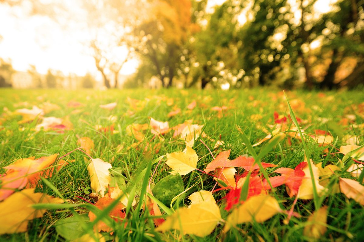 Fall leaves on meadow in autumn