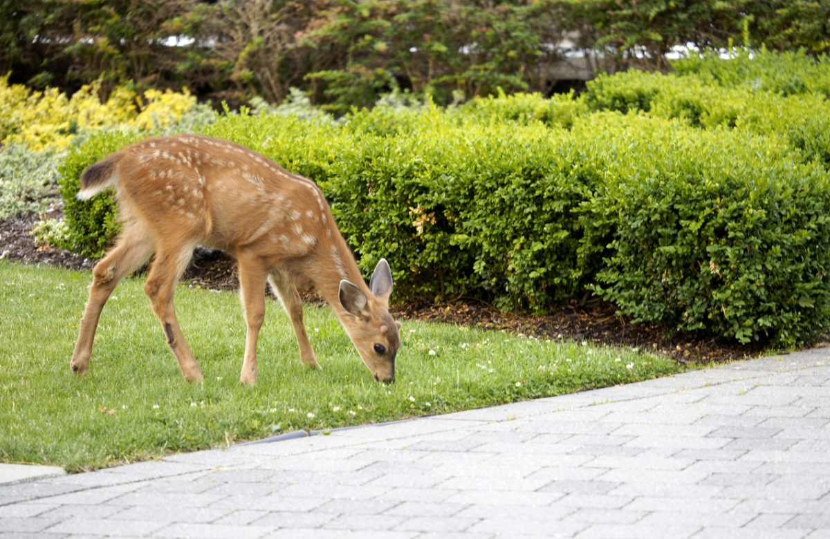 Tips For Keeping Deer Off Your Property