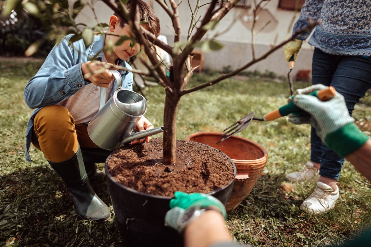 How To Celebrate Arbor Day at Home