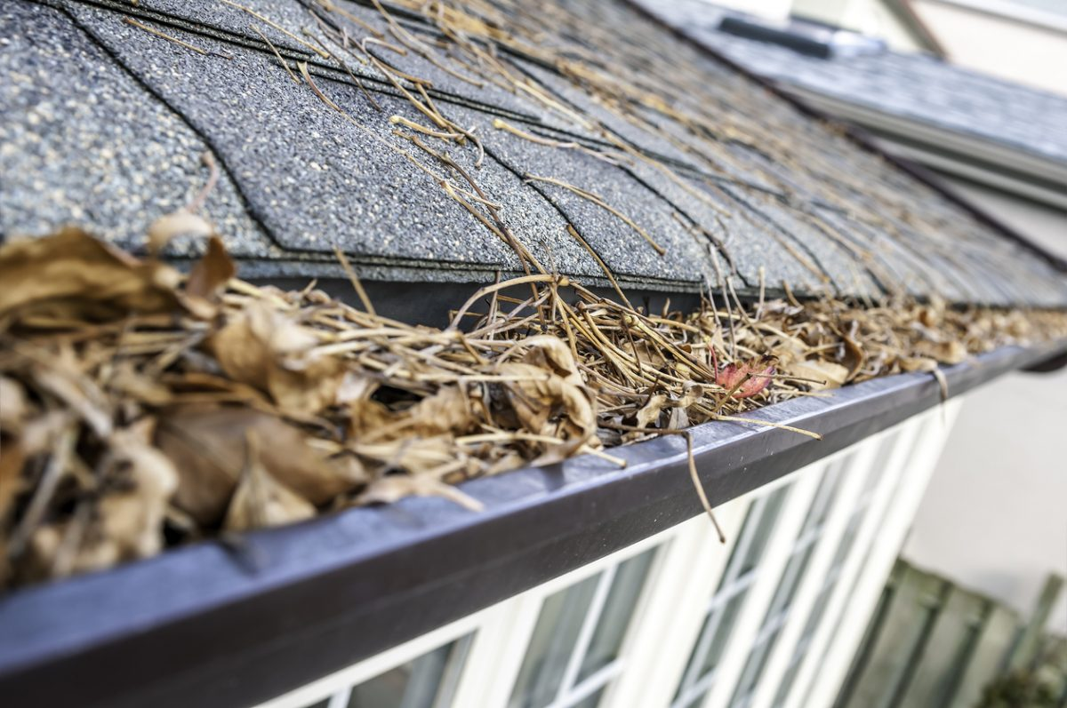 DIY Gutter Cleaning Tips